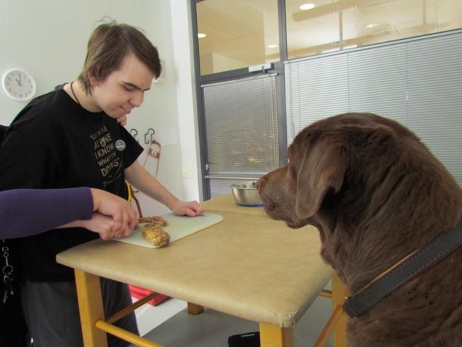Nuori mies pilkkoo herkkupalaa pöydän ääressä. Kuvan etualalla labradori katselee poikaa.